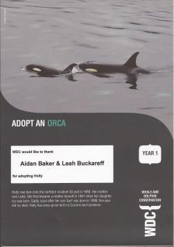 WDC Adoption